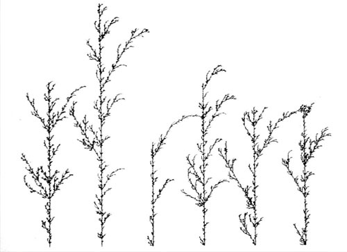 Nature_is_Data_algorithmicBeautyPlants