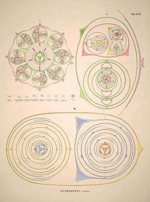 Historia naturalis palmarum